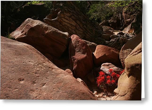 Desert Paintbrush Zion National Park Greeting Card
