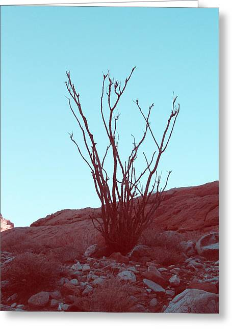 Desert Plant Greeting Card by Naxart Studio