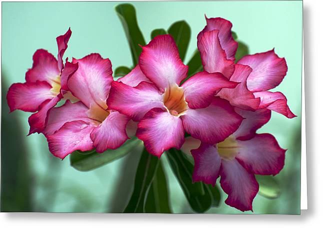 Desert Rose Greeting Card by June Pryor