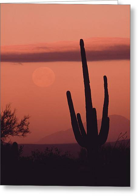 Desert Scene With Full Moon And Saguaro Greeting Card
