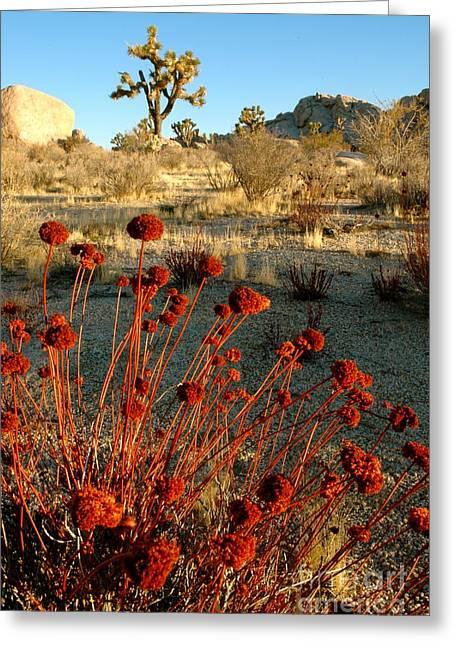 Greeting Card featuring the photograph Desert Surprise by Johanne Peale