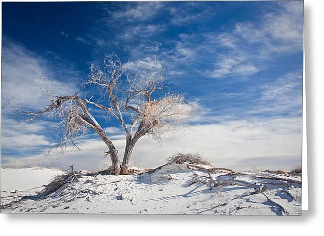 Desert Tree In White Sands Greeting Card by Ralf Kaiser