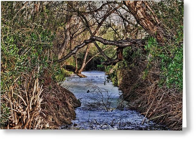 Desolation Creek Hdr Greeting Card