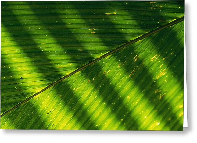 Detail Of A Large Leaf With Shadows Greeting Card by Bill Curtsinger