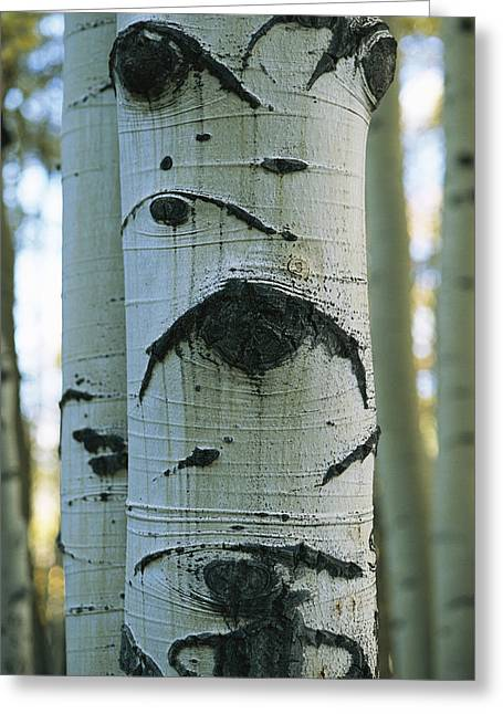 Detail Of A Tree Trunk With Face-like Greeting Card