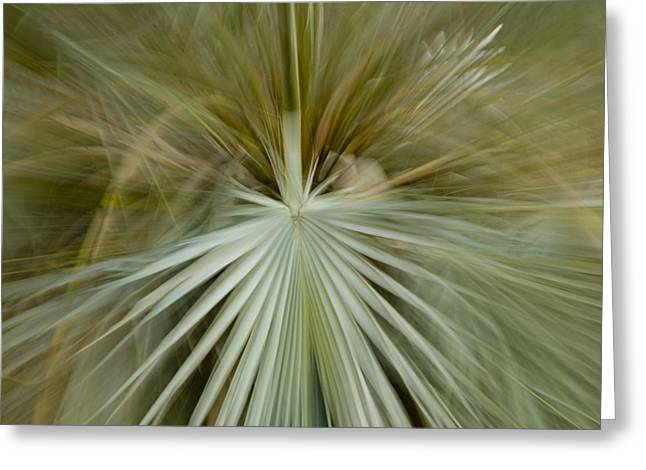 Detail Of Mexican Blue Palm Fronds Greeting Card by Ralph Lee Hopkins