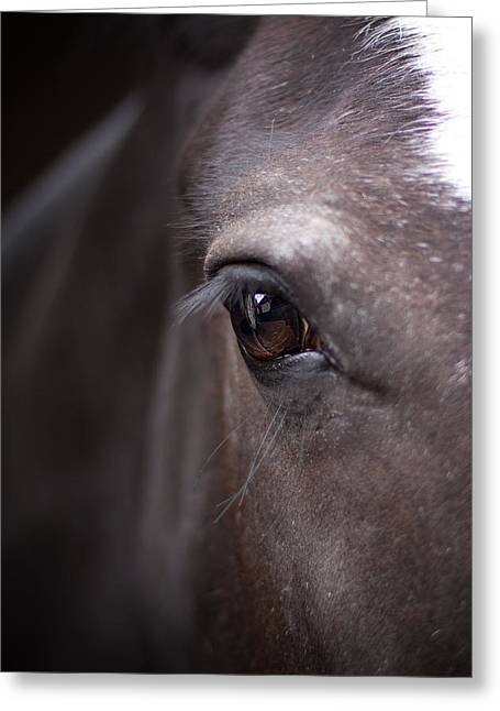 Detailed close up of black horses eye greeting card by ethiriel photography