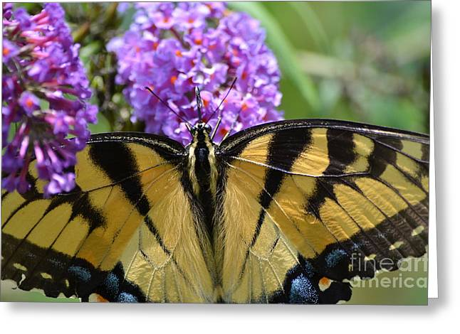 Detailed Wings Greeting Card by Kathy Gibbons
