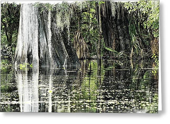Details Of A Florida River Greeting Card by Janie Johnson