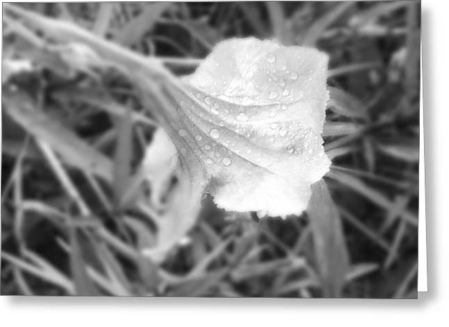 Dew Greeting Card by Chasity Johnson