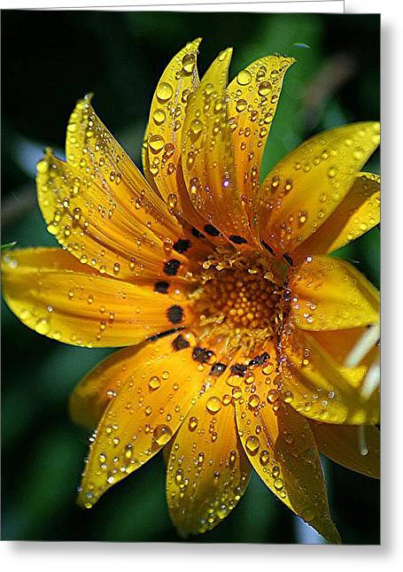 Dew-dipped Wildflower Greeting Card