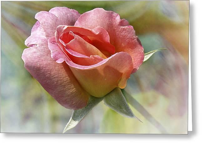 Dew Drop Pink Rose Greeting Card by J Larry Walker