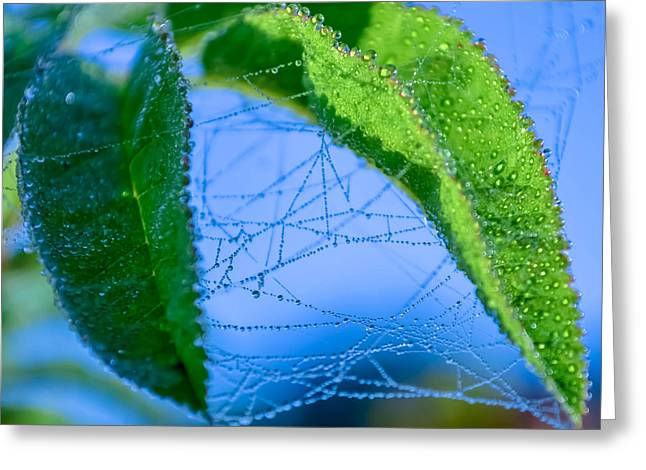 Dew Droplets Greeting Card by Brian Stevens