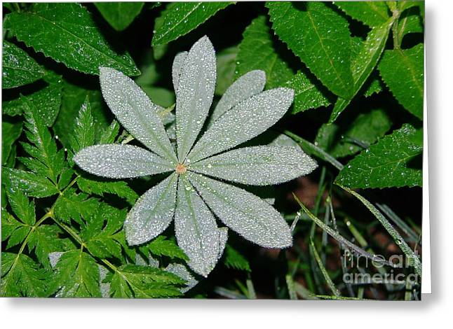 Dew Drops In The Morn  Greeting Card by Jeff Swan