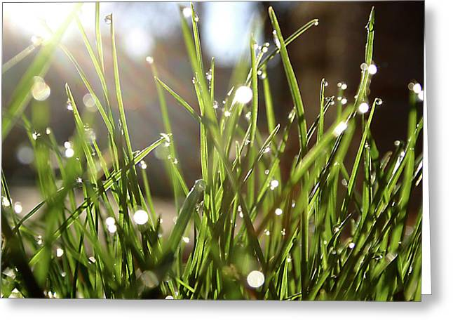 Dew Greeting Card by Emanuel Tanjala