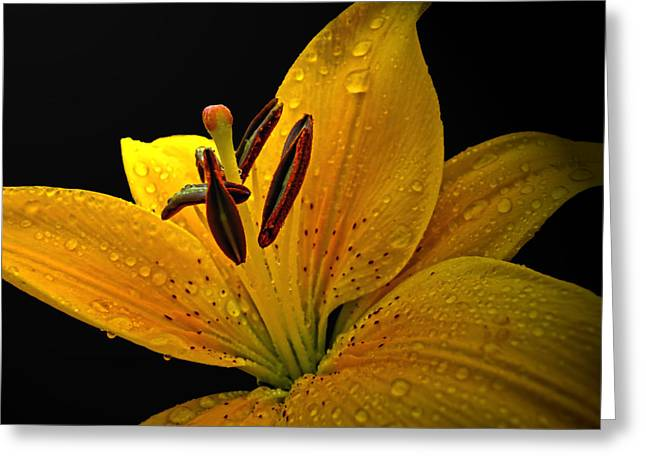 Greeting Card featuring the photograph Dew On The Daylily by Debbie Portwood