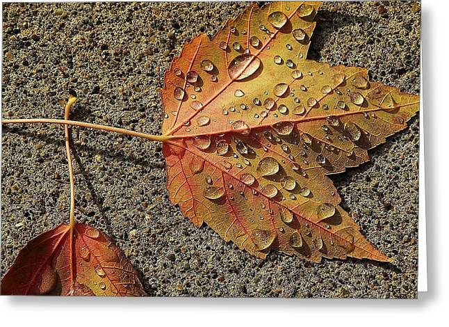 Dew On The Maple Leaf Greeting Card