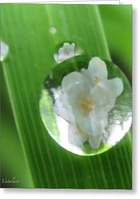 Dewdrop Reflections Greeting Card by Debra     Vatalaro