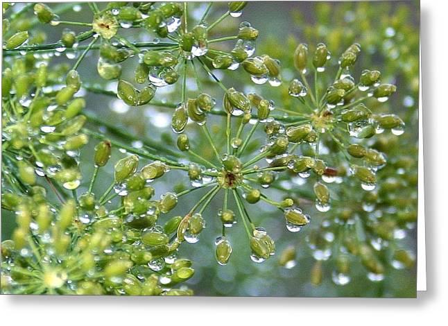 Dewdrops On Dill  Greeting Card by Ellen Heaverlo