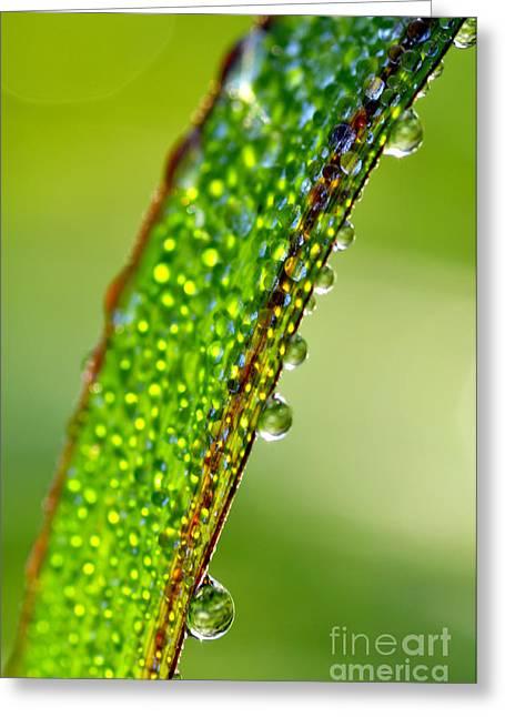 Dewdrops On Lemongrass Greeting Card by Thomas R Fletcher