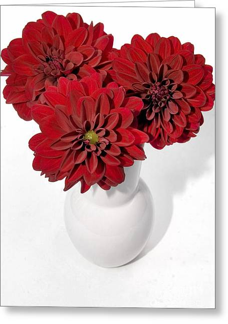 Dhalia On White Greeting Card by Susan Smith
