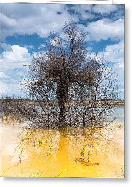 Greeting Card featuring the photograph Die Standing by Edgar Laureano