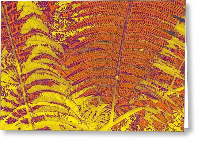 Digital Ferns Greeting Card by Colleen Cannon