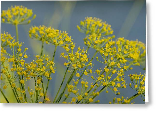 Dill Greeting Card by Lisa Tate
