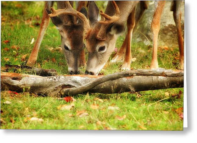 Dining Together Greeting Card by Karol Livote