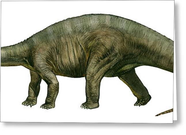 Diplodocus, A Prehistoric Era Dinosaur Greeting Card by Sergey Krasovskiy
