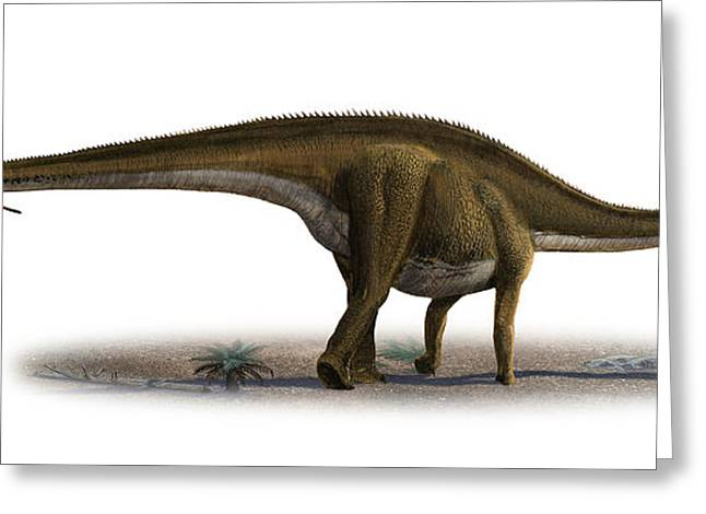 Diplodocus Longus, A Prehistoric Era Greeting Card by Sergey Krasovskiy