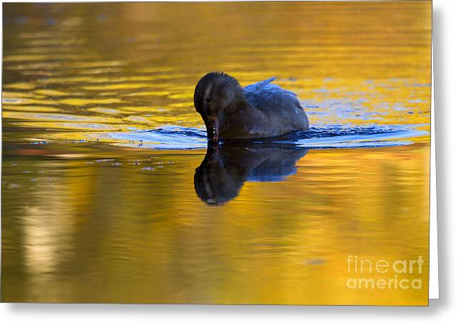 Dipping In Gold Greeting Card by Mike  Dawson