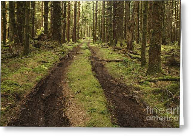 Dirt Road Through Forest Greeting Card