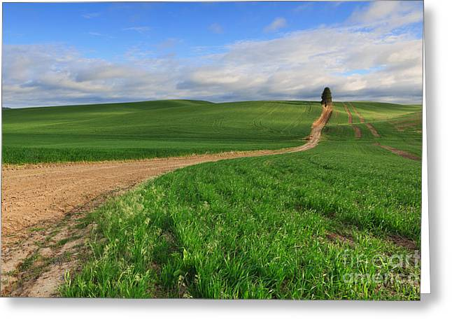Dirt Roads Greeting Card by Beve Brown-Clark Photography