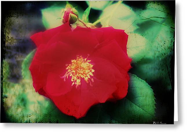 Dirty Rose Knows Greeting Card by Bill Cannon