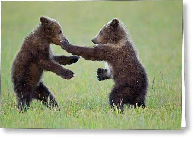 Disco Cubs Greeting Card