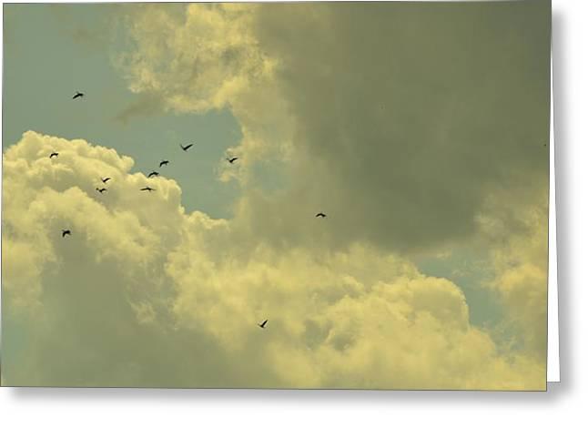 Distant Birds Greeting Card by Naomi Berhane
