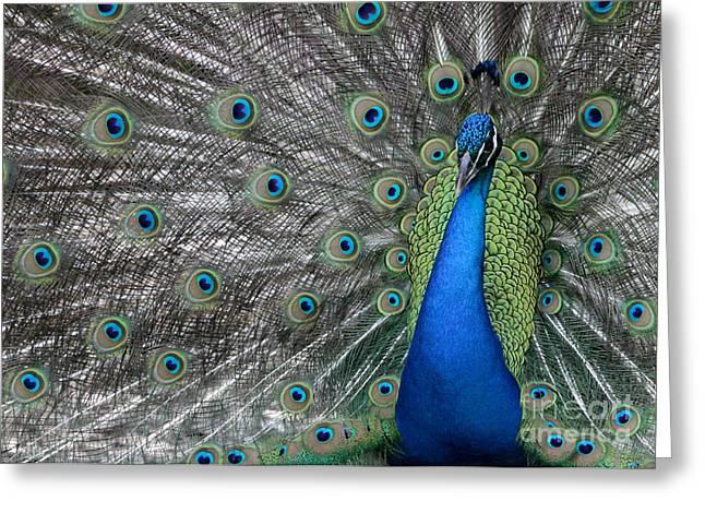 Diva Peacock Greeting Card by Sabrina L Ryan