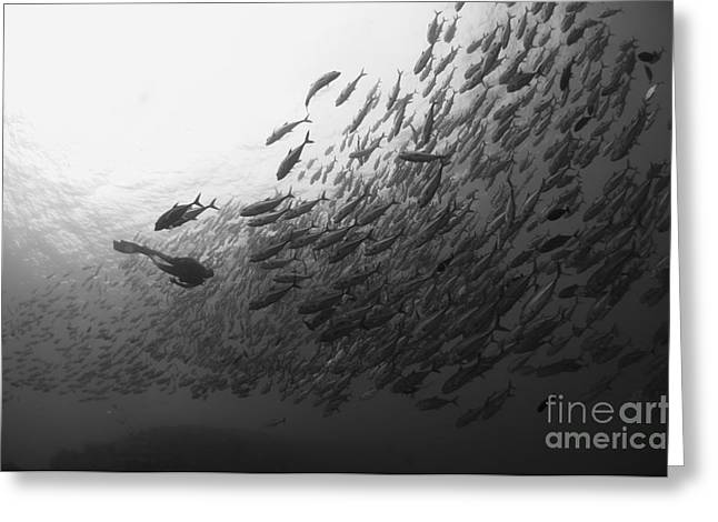 Diver Approaching A Large School Greeting Card