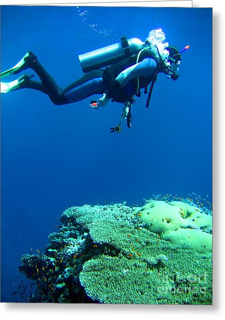 Diver In Deep Greeting Card by MotHaiBaPhoto Prints