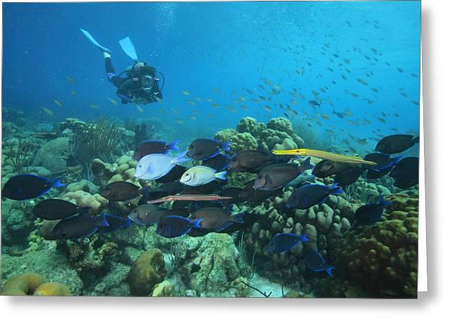 Diver Watching Blue Tangs, Doctorfish Greeting Card