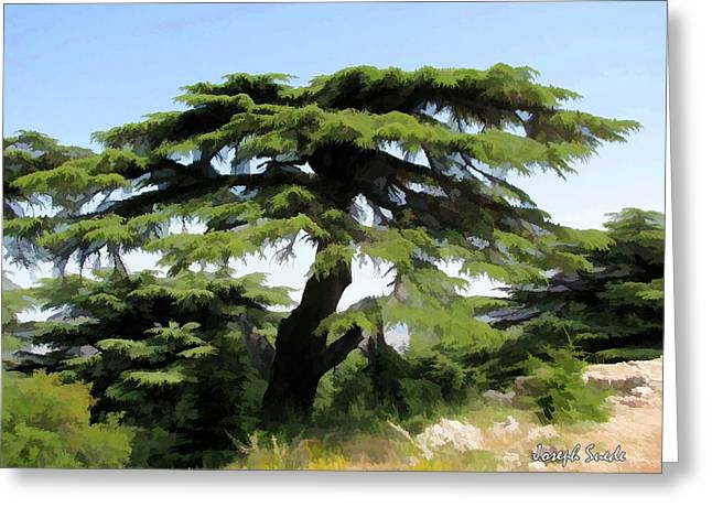 Do-00511 Cedar Forest Greeting Card by Digital Oil