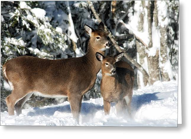 Doe A Deer Greeting Card by Nancy Dempsey