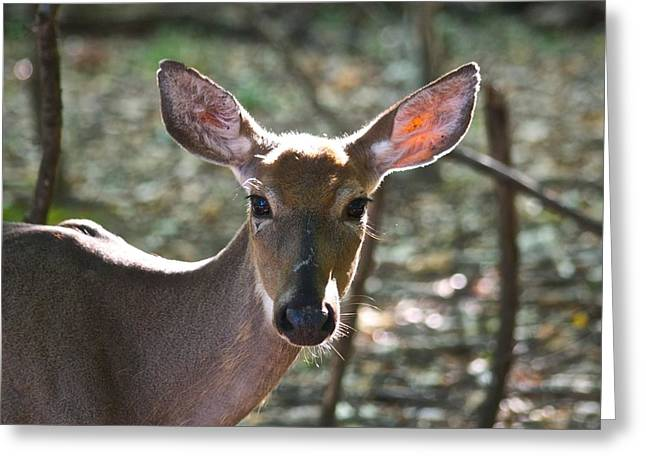 Doe Profile 9734 Greeting Card by Michael Peychich