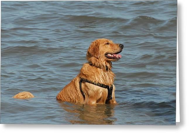 Dog 106 Greeting Card by Joyce StJames