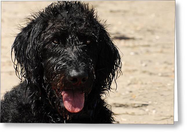 Dog 73 Greeting Card by Joyce StJames