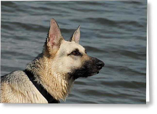 Dog 90 Greeting Card by Joyce StJames