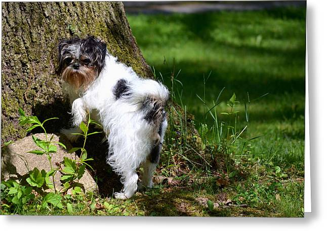 Dog And Tree Greeting Card