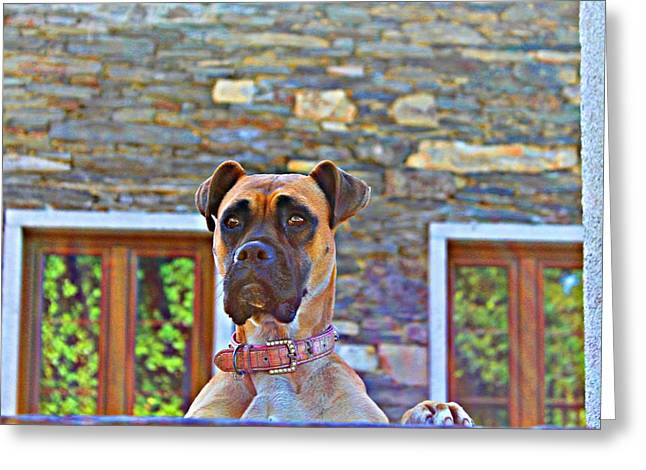 Dog Buldog Greeting Card by Jenny Senra Pampin