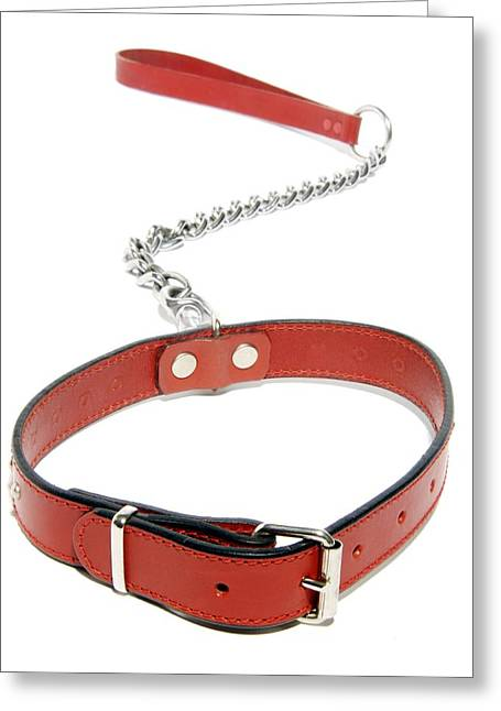 Dog Collar Greeting Card